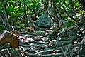 Stair in the forest.jpg