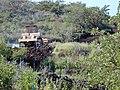Starr-020323-0051-Bidens pilosa-habitat with Caterpillar D9R dozer just after first corner on A-Puu o Kali-Maui (24548179075).jpg