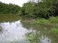 Starr-040323-0057-Schinus terebinthifolius-flooded area-Kanaha Beach-Maui (24072877153).jpg