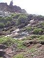Starr-050404-0031-Panicum fauriei-habitat-Mokeehia-Maui (24741455085).jpg