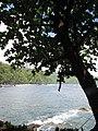 Starr-090623-1504-Terminalia catappa-habit view ocean-Nahiku-Maui (24966688165).jpg