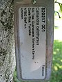 Starr-091104-0935-Calliandra haematocephala-plant tag ID in question-Kahanu Gardens NTBG Kaeleku Hana-Maui (24692362440).jpg