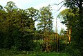 Staw - panoramio (16).jpg