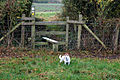 Stile on the footpath from Harbury to Ufton Hill Farm - geograph.org.uk - 1569991.jpg