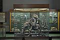 Stralsund, im Meeresmuseum (2013-02-13), by Klugschnacker in Wikipedia (44).JPG