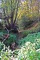 Stream, Alderholt, Dorset - geograph.org.uk - 1040563.jpg