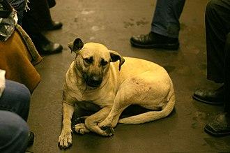 Street dog - Street dog riding the subway