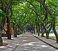 Sun Yatsen University, Guangzhou (1).jpg
