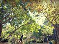 Sunny Sky at Murphy Sculpture Garden.jpg