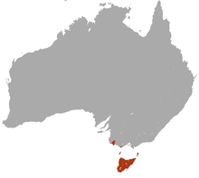 Swamp Antechinus area.png