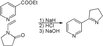 Synthese von Myosmin