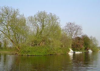 Thames Ditton Island - Swan Island, the middle of the three islands, with Boyle Farm Island behind