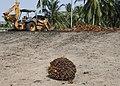 Tamalang Kudat Sabah FFB-Collecting-Centre-03.jpg