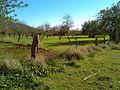 Tanca de pals de fusta i reixa diàfana al pla de Labritja - panoramio (1).jpg