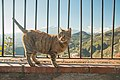 Taormina (38839400004).jpg