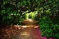 Temple Gardens (213809549).jpeg