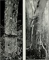The American woods - exhibited by actual specimens and with copious explanatory text (1910) (18135624346).jpg