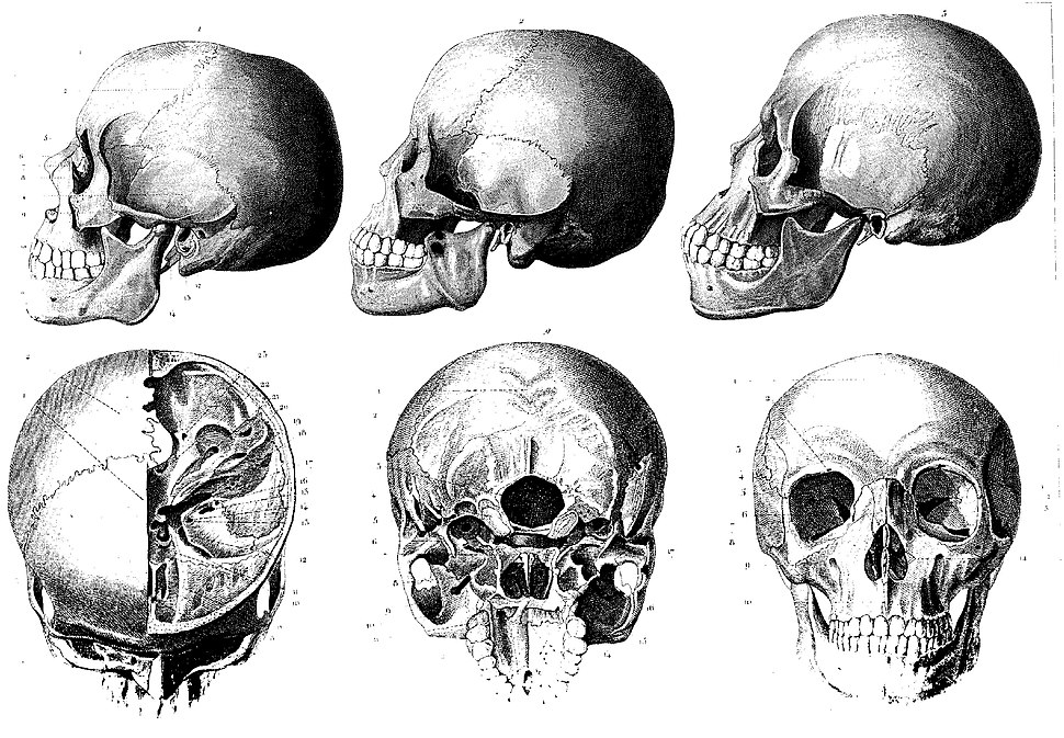 The Iconographic Encyclopaedia of Science, Literature and Art, 1851 - Human skulls