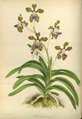 The Orchid Album-02-0036-0059.png