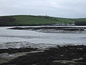 Chondria (alga) - Chondria coerulescens in Devon