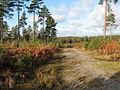 The Serpents Trail path in Lavington Plantation - geograph.org.uk - 1636715.jpg