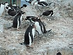 The World Factbook - Antarctica - Flickr - The Central Intelligence Agency (5).jpg