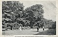 The croquet lawn (15225671087).jpg
