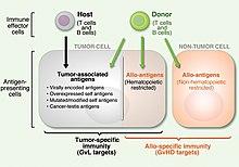 Hematopoietic stem cell transplantation - Wikipedia
