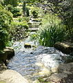 The waterfall in Queen Mary's Gardens, Regent's Park - geograph.org.uk - 1357873.jpg