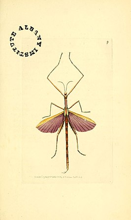 The zoological miscellany (6127017861).jpg
