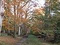Thunderdell Wood, Ashridge - geograph.org.uk - 82071.jpg
