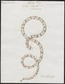 Tortrix scytale - 1700-1880 - Print - Iconographia Zoologica - Special Collections University of Amsterdam - UBA01 IZ11400011.tif