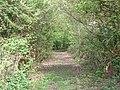 Track to Pinkhurst - geograph.org.uk - 228877.jpg