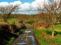 Track to old Watchwell Station, in Calbourne, Isle of Wight.jpg