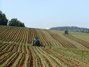 Monoculture - A monocultivated potato field