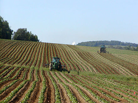 Potato field in Fort Fairfield, Maine Tractors in Potato Field.jpg