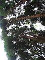 Trail to Lago do Fogo, São Miguel Island, Azores - panoramio.jpg