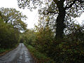 Tree lined country road - geograph.org.uk - 597927.jpg