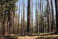 Trees (11407940005).jpg