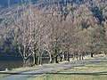 Trees at the foot of Buttermere - geograph.org.uk - 1744976.jpg