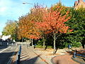 Trees in Museum Square - Wardwick, Derby - geograph.org.uk - 599210.jpg