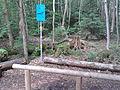 Trimm-Dich-Pfad Grünwalder Forst.jpg