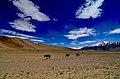 Tso Kar Ladakh, Nitai Mondal.jpg