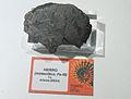Tucson meteorite, pattern.jpg
