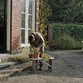 Tuinman aan het werk voor de oranjerie - Goor - 20405217 - RCE.jpg