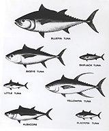 tunaの意味 使い方 英和辞典 weblio辞書