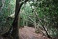 Tunbridge Wells Circular Path - near the top of Groombridge Hill, Beech Wood - geograph.org.uk - 1493312.jpg