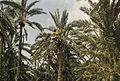 Tunis1960-035 hg.jpg