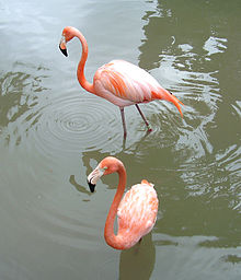 To flamingoar