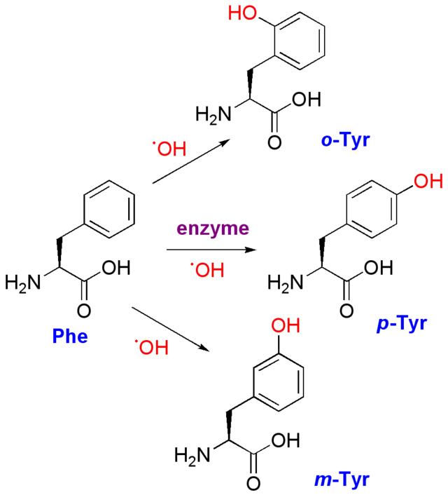 aminozuur tyrosine